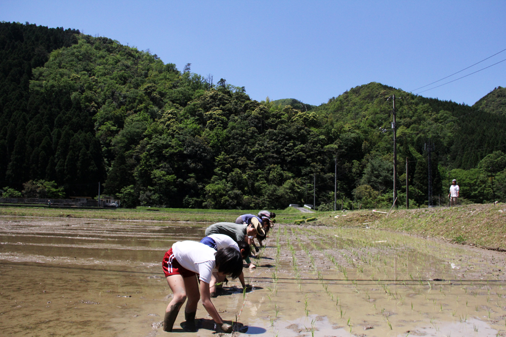 コッコの飼料米