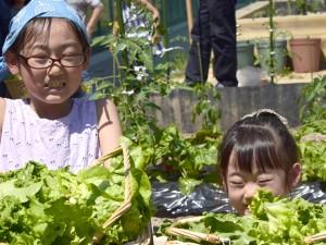 体験教室;野菜の収穫