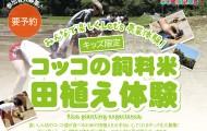 コッコの飼料米田植え体験