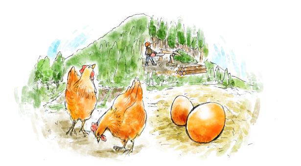 コッコが地球を救う「クラウドファンディング」実施【大江ノ郷自然牧場】